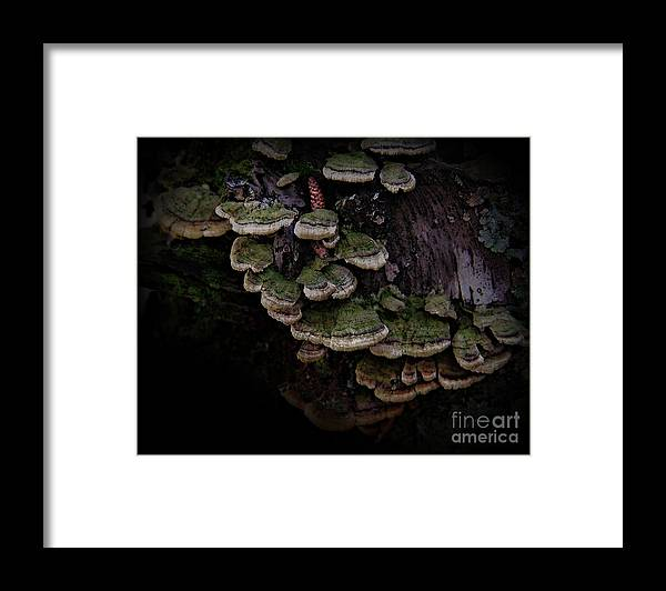 Scotopic Framed Print featuring the photograph Scotopic Vision 1 - Pinecone by Pete Hellmann