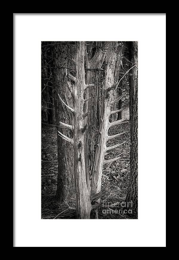 Scotopic Framed Print featuring the photograph Scotopic Vision 4 - Trees by Pete Hellmann
