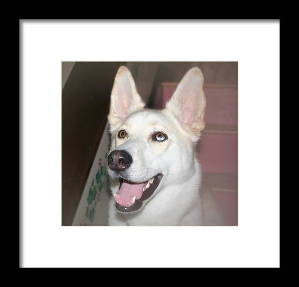 Scouty Framed Print featuring the photograph Scouty by Amy Holmes