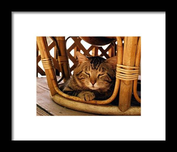 Cats Framed Print featuring the photograph Scrappy In Earth Tones by Heather S Huston