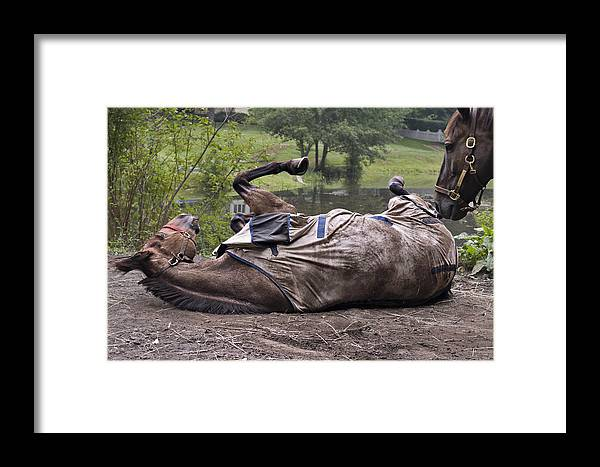 Horse Framed Print featuring the photograph Scratching The Itch by Jack Goldberg