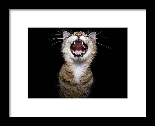 Cat Framed Print featuring the photograph Scream by Ken Norcross