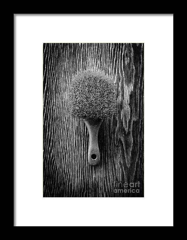Art Framed Print featuring the photograph Scrub Brush Up Bw by YoPedro