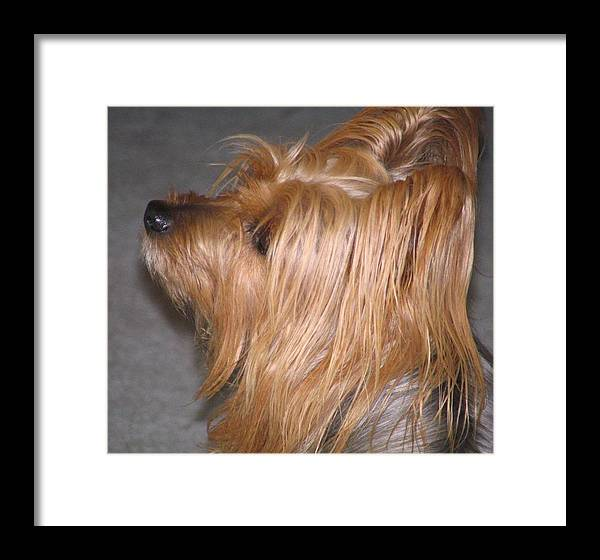 Dogs Framed Print featuring the photograph Scruffy by Peggy Holcroft