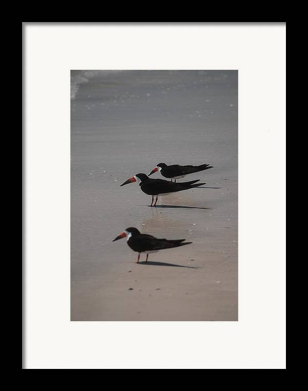 Landscape Framed Print featuring the photograph Sea Birds by Lisa Gabrius