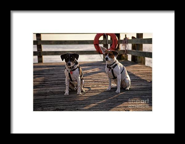 Dogs Framed Print featuring the photograph Sea Dogs by Karen Goodwin