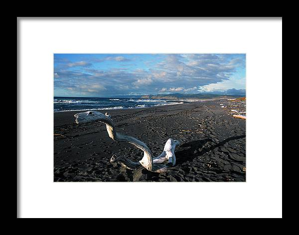 Ocean Framed Print featuring the photograph Sea Dragon by Tom Melo
