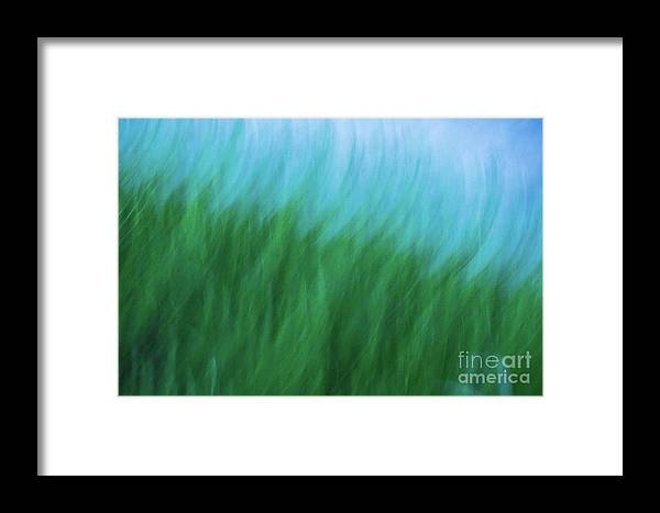 Abstract Framed Print featuring the photograph Sea Grass Breeze by Robin Zygelman