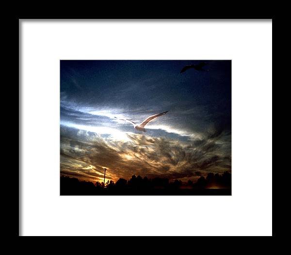 Gull Framed Print featuring the photograph Sea Gull At Night by Ralph Perdomo