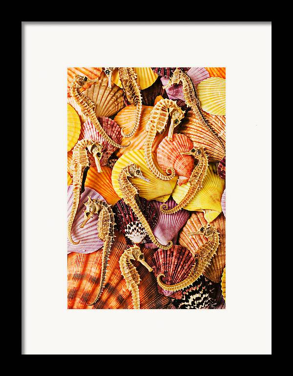 Seahorses Framed Print featuring the photograph Sea Horses And Sea Shells by Garry Gay