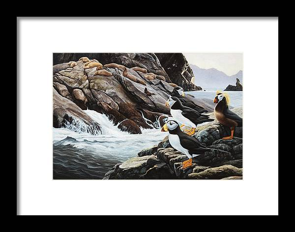 Puffin Painting Bird Sea Lion Boulders Rocks Brown Ocean Walrus Framed Print featuring the painting Sea Lion Island-puffins by Daniel Pierce