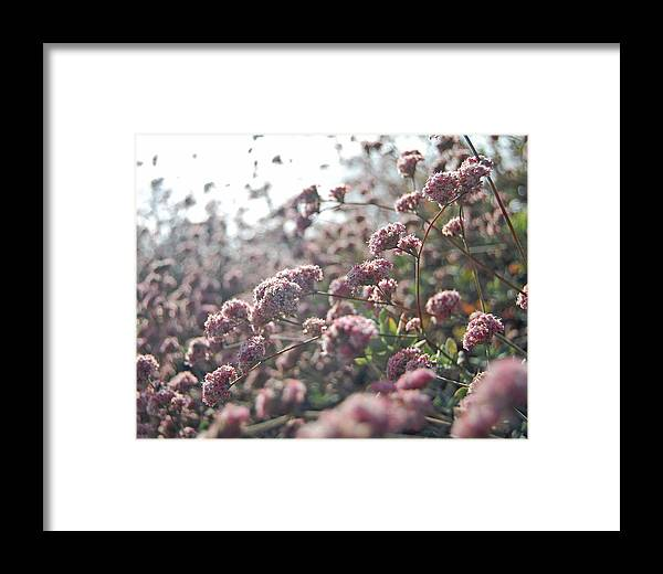 Pink Framed Print featuring the photograph Sea Of Pink by Jean Booth
