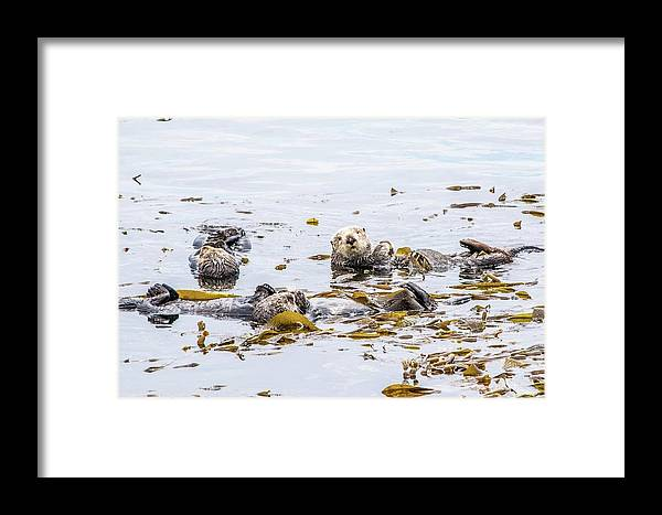 Otter Framed Print featuring the photograph Sea Otter by Eric Strickland