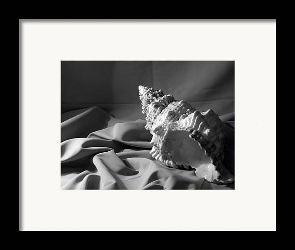 Seashell Framed Print featuring the photograph Sea Shell From The Beach by Keri Renee