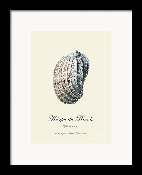 Sea Shell Framed Print featuring the drawing Sea Shell by Patruschka Hetterschij