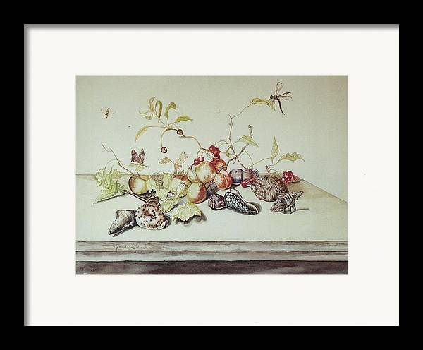 Still Life Fruit Shells Insects Framed Print featuring the painting Sea Shells by Joseph Valencia