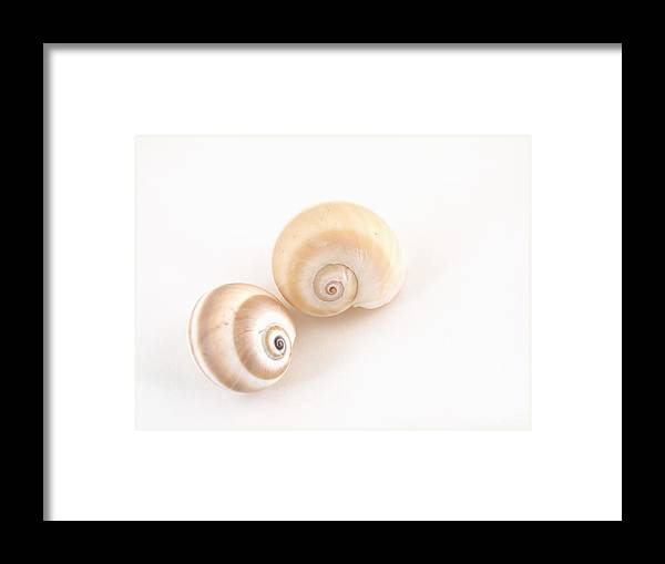 Animal Framed Print featuring the photograph Sea Snail Shells by Robert Gebbie