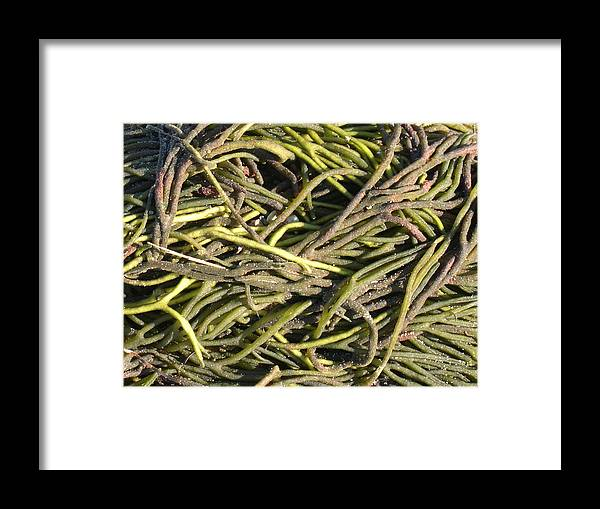 Sea Framed Print featuring the photograph Sea Weed Cluster by Rebecca Marona