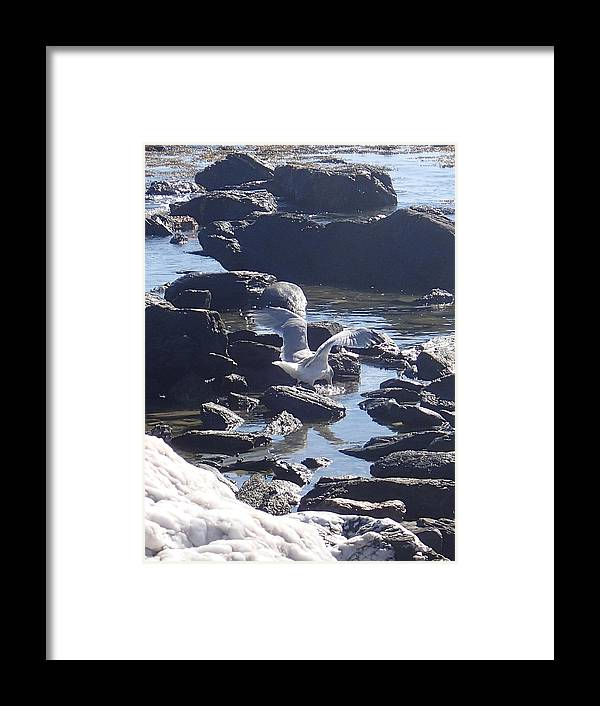 Nature Framed Print featuring the photograph Seagull 11 by Robert Nickologianis