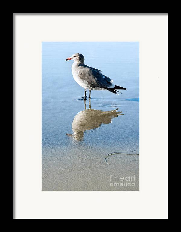 United States Meditation Serene Serenity Contemplating Contemplation Peaceful Sand Reflection Southern California La Jolla Beach Seagull Bird Fauna Animal Nature Calm America American Tranquil Summer Summertime san Diego Reflected Beautiful Gull Seabird Profile Standing Side Laridae Sunny Quiet Framed Print featuring the photograph Seagull At La Jolla Shores Beach California by Julia Hiebaum