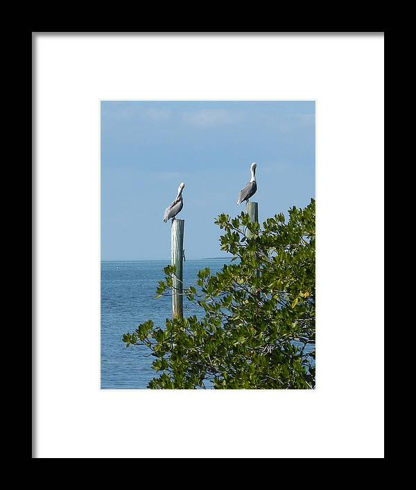 Birds Framed Print featuring the photograph Seagull by Audrey Venute