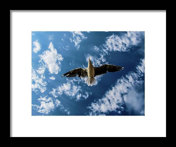 Seagull Flying Clouds Framed Print featuring the photograph Seagull Flying by Mar Nie