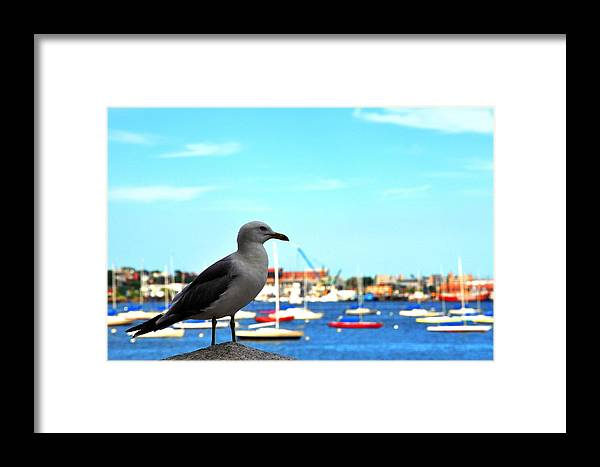 Seagull Framed Print featuring the photograph Seagull In Boston Harbor by Andrew Dinh