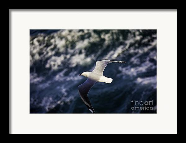 Seagull Framed Print featuring the photograph Seagull In Wake by Avalon Fine Art Photography