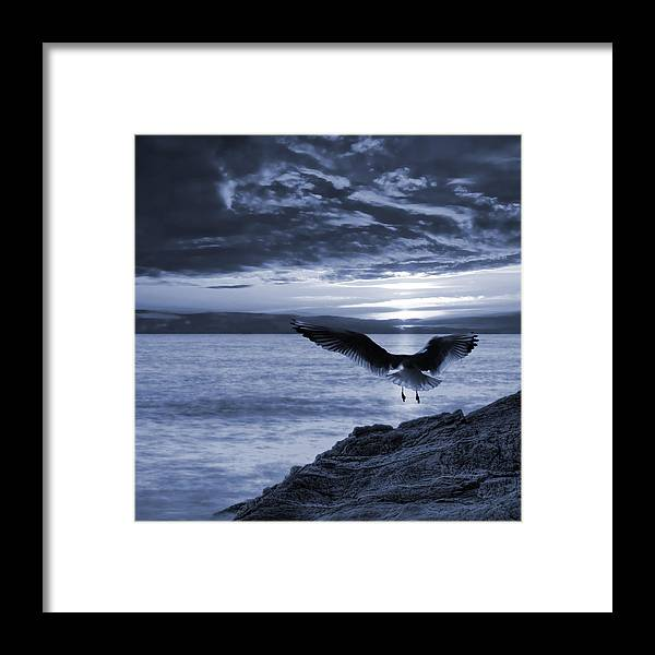 Atmospheric Framed Print featuring the photograph Seagull by Jaroslaw Grudzinski