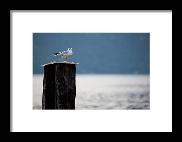 Italy Framed Print featuring the photograph Seagull by Luigi Barbano BARBANO LLC