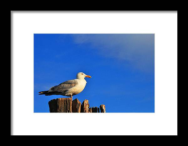 Seagull Framed Print featuring the photograph Seagull On A Dock by Andrew Dinh