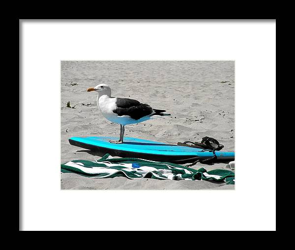 Bird Framed Print featuring the photograph Seagull On A Surfboard by Christine Till