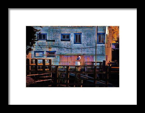 Seagull Framed Print featuring the photograph Seagull On Duty by Helen Carson