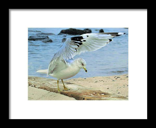Seagull Framed Print featuring the photograph Seagull On The Beach by Nina Bradica