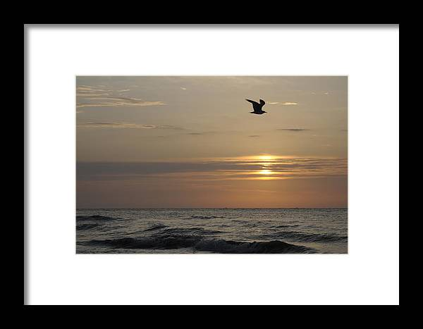 Seagull Framed Print featuring the photograph Seagull Over Atlantic Ocean At Sunrise by Darrell Young