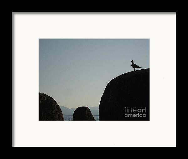 Nature Framed Print featuring the photograph Seagull Silhouette by Silvie Kendall