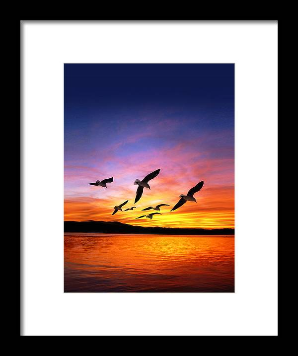 Seagulls Framed Print featuring the photograph Seagull Sunset  by Gravityx Designs