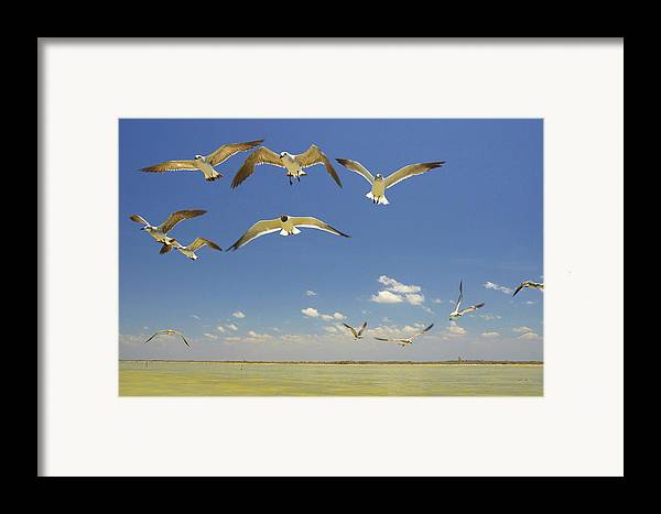 Seagull Framed Print featuring the photograph Seagulls by Elisa Locci