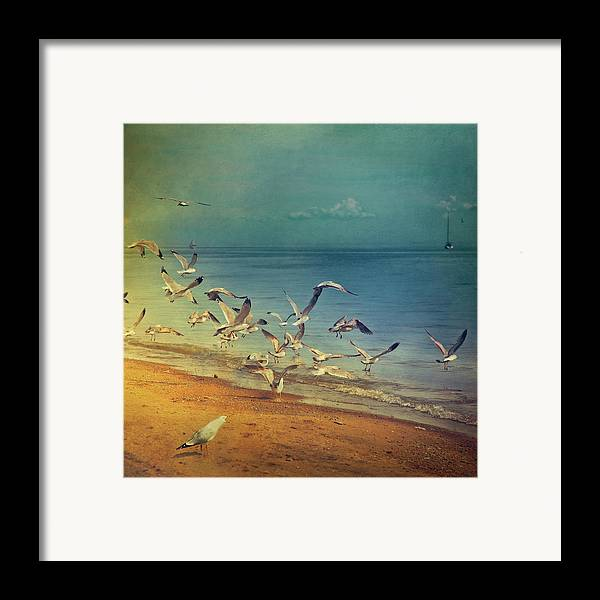Square Framed Print featuring the photograph Seagulls Flying by Istvan Kadar Photography