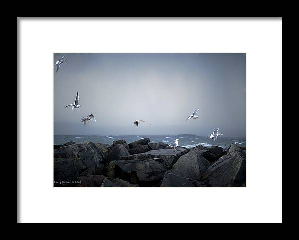 Landscape Framed Print featuring the photograph Seagulls in Flight by Larry Keahey