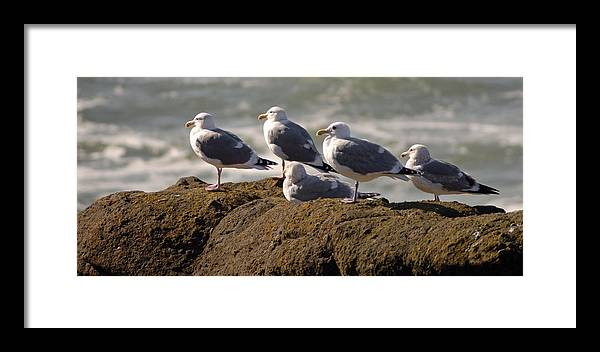 Bird Framed Print featuring the photograph Seaguls by Curtis Gibson