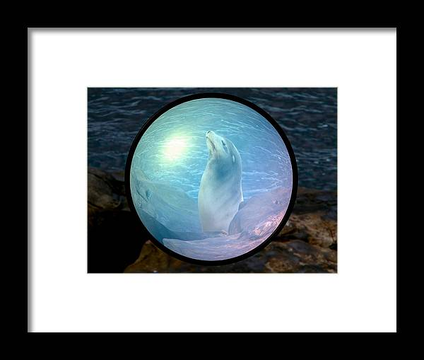 Natural Framed Print featuring the photograph Seal by Guillermo Mason