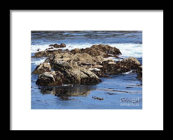California Coast Framed Print featuring the photograph Seal Island by Carol Groenen