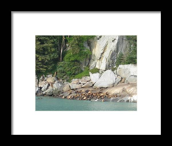 Framed Print featuring the digital art Seals Enjoying Alaskan Sun by Barb Morton