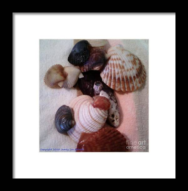 Seashells Framed Print featuring the photograph Seashells by Jamey Balester