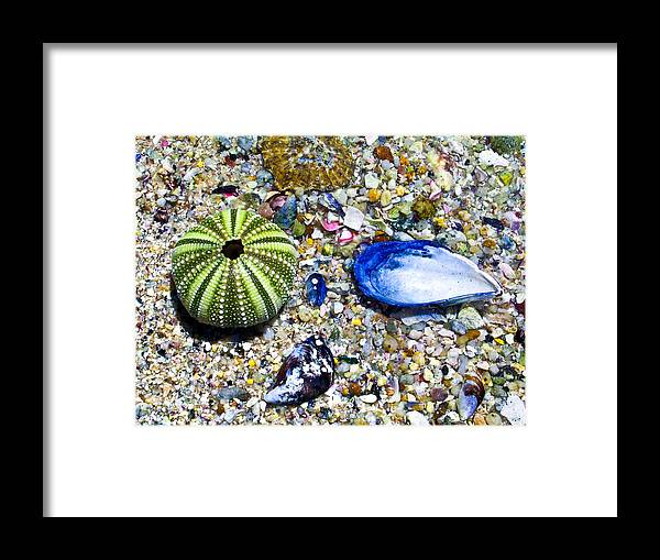 Seashore Framed Print featuring the photograph Seashore Colors by Douglas Barnett