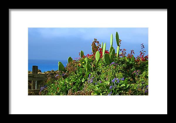 Garden Framed Print featuring the photograph Seaside Garden by Linda Morland