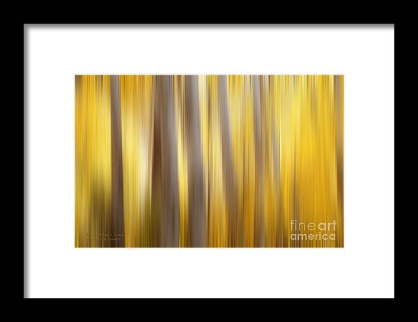 Woods Framed Print featuring the photograph Seasoned by Beve Brown-Clark Photography