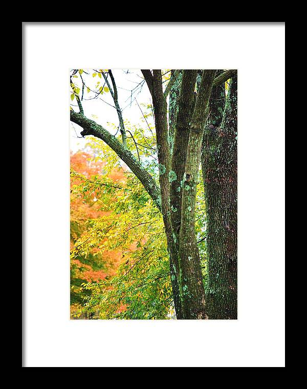 Trees Framed Print featuring the photograph Seasons by Trudi Southerland