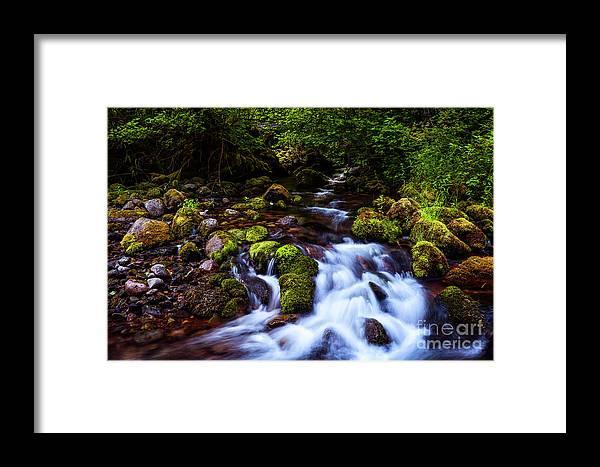 Streams Framed Print featuring the photograph Secret Stream by Adam Reisman